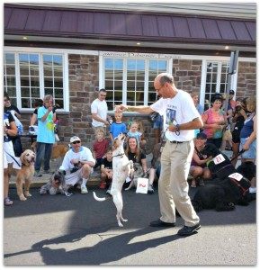 Dog Days 2016 @ Downtown Ambler |  |  |